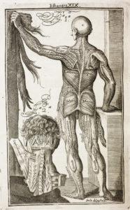 MARTÍNEZ, Martín- Anatomía completa del hombre